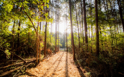 Texas Grand Ranch vies to be the next great wooded community.